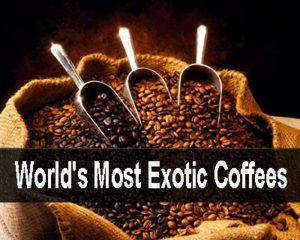 3 of the worlds most exotic coffees