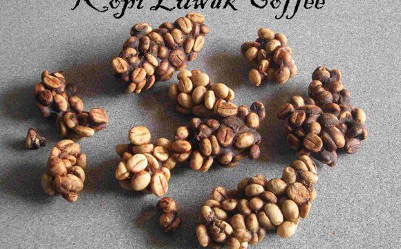 kopi luwak indonesia coffee bean