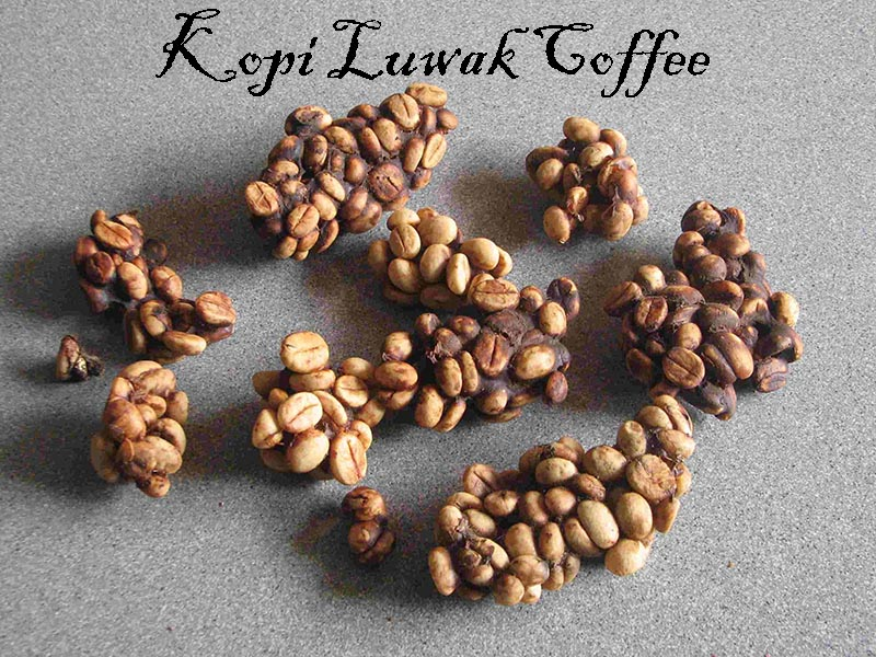 kopi luwak indonesia coffee bean