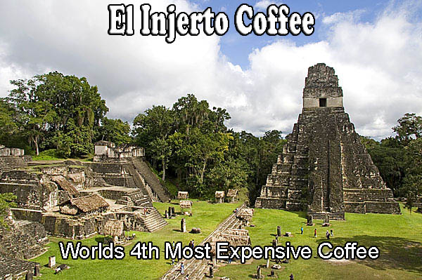 El Injerto Coffee