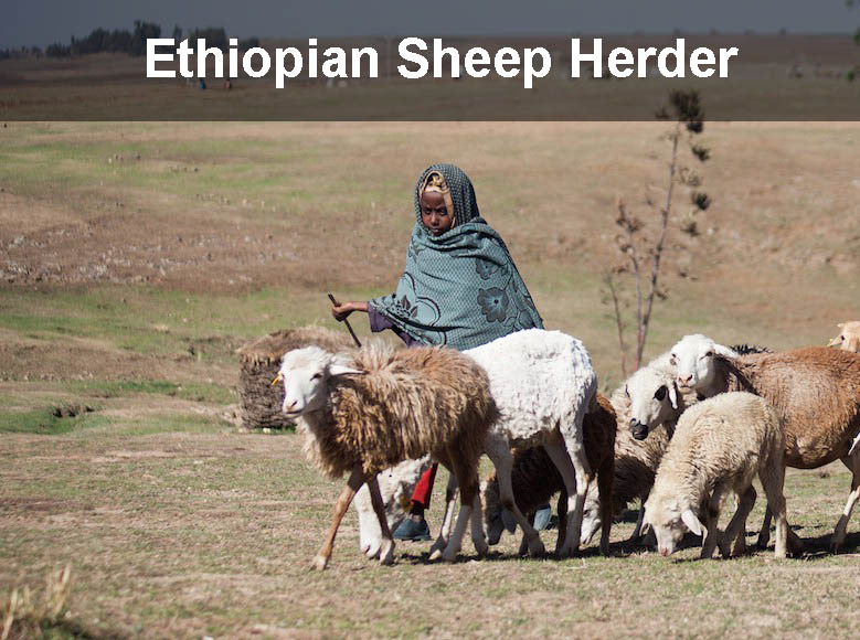 Coffee Discovered By Ethiopian Sheep Herder
