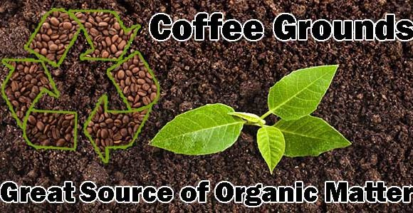 Coffee Grounds – Great Source of Organic Matter
