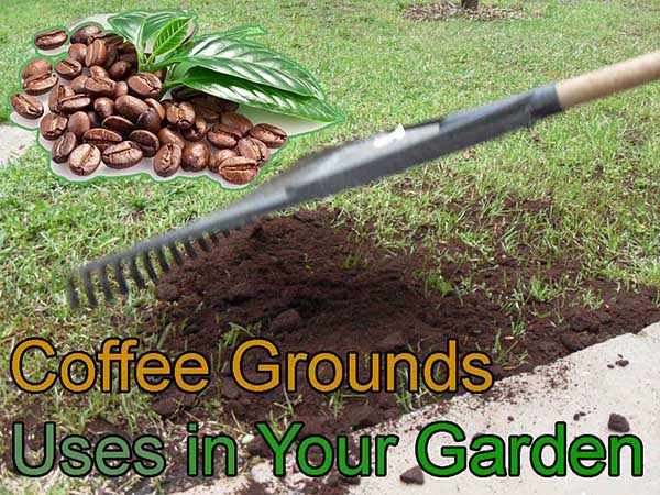 Different Ways to Use Coffee Grounds in Your Garden