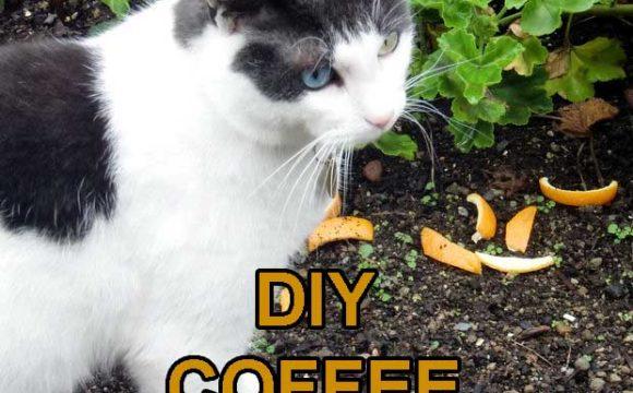 DIY coffee pet repellent