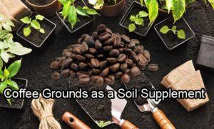 coffee grounds as soil supplement