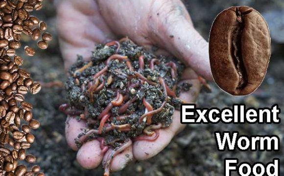 use coffee as worm food