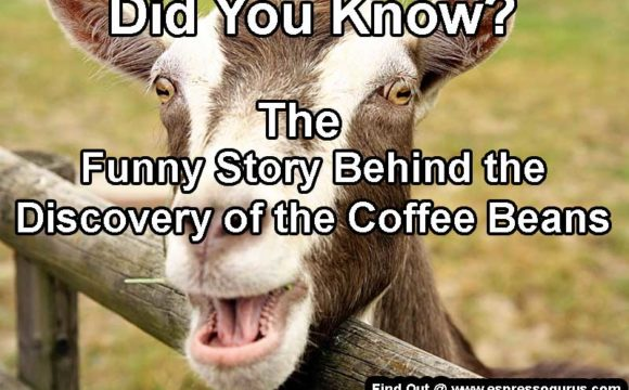 International coffee day Coffee Facts you must know