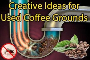 Creative Ideas for Used Coffee Grounds